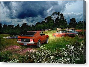 Mustang Field Canvas Print by Tom Straub