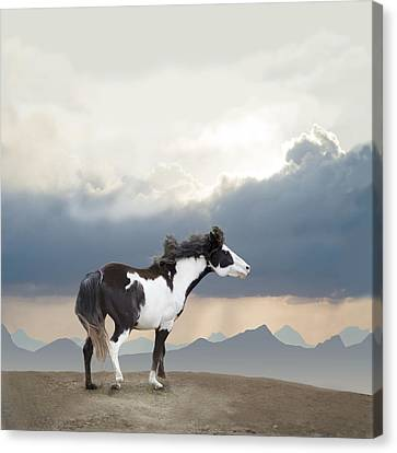 Mustang Freedom Canvas Print by Barbara Hymer