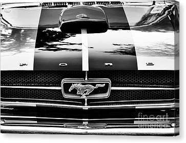 Front End Canvas Print - Mustang Hood  by Tim Gainey