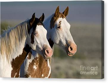 Mustang Mare And Son Canvas Print by Jean-Louis Klein and Marie-Luce Hubert