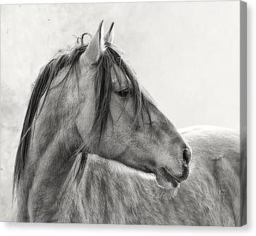 Mustang Canvas Print by Ron  McGinnis