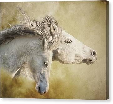 Mustang Run Canvas Print by Ron  McGinnis