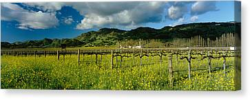 Mustard Crop In A Field Near St Canvas Print by Panoramic Images