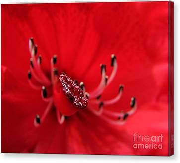 Canvas Print featuring the photograph Mutant Macro by Chris Anderson