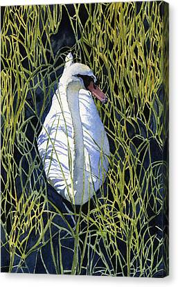 Mute Swan Canvas Print by Heidi Gallo