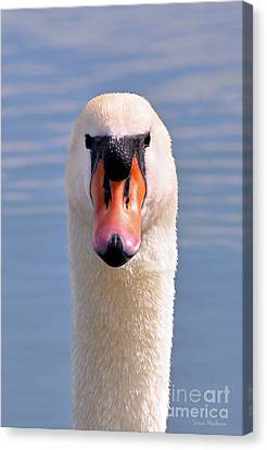 Canvas Print featuring the photograph Mute Swan Staring by Susan Wiedmann