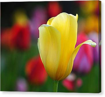 Canvas Print featuring the photograph Muted Colors by Paul Noble