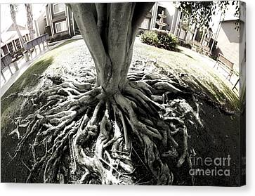 Canvas Print featuring the photograph Muted Roots by Clayton Bruster