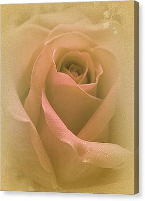 My Angel's Rose Canvas Print by The Art Of Marilyn Ridoutt-Greene