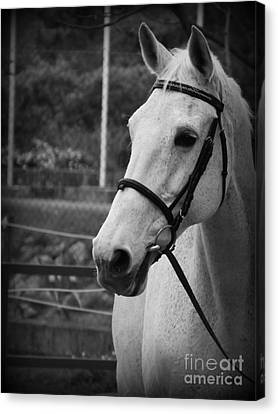 Canvas Print featuring the photograph My Best Friend by Clare Bevan