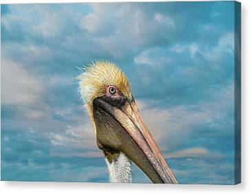 My Better Side - Florida Brown Pelican Canvas Print