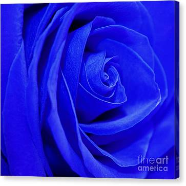 My Blue Valentine Canvas Print by Krissy Katsimbras