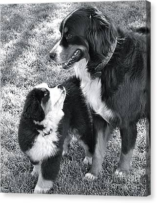 Canvas Print featuring the photograph My Bodyguard by Barbara Dudley