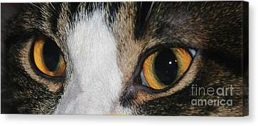 My Cat Is The Cat Of All Cats Canvas Print by PainterArtist FIN