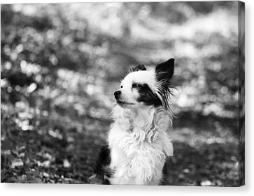 My Dog Canvas Print by Daniel Precht