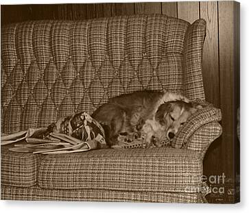 My Dog Sleeping On The Couch Circa 1976 Canvas Print by ImagesAsArt Photos And Graphics