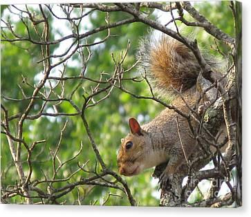 My First American Squirrel Canvas Print by Ausra Huntington nee Paulauskaite