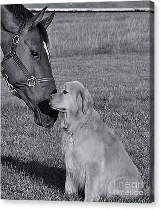 Canvas Print featuring the photograph My Friend by Barbara Dudley