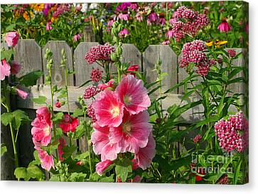 My Garden 2011 Canvas Print by Steve Augustin