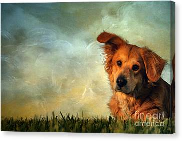 My Girl Canvas Print by Darren Fisher