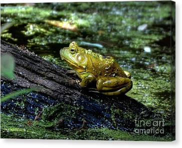 My Handsome Prince Canvas Print by Kathy Baccari