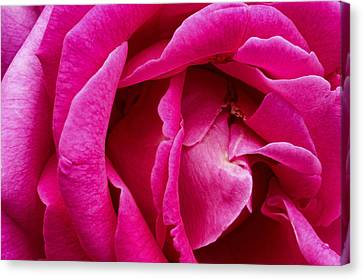 My Last Rose Canvas Print by Kenneth Feliciano