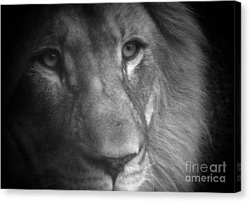 My Lion Eyes Canvas Print by Thomas Woolworth