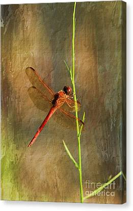 My Little Red Friend Canvas Print
