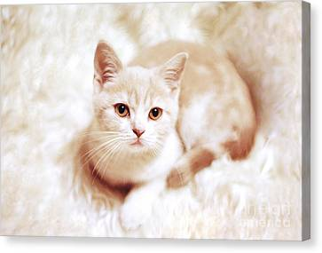 My Master Canvas Print by Aiolos Greek Collections