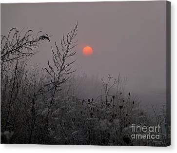 My Misty Morning Canvas Print by AmaS Art