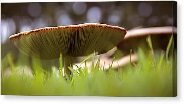 Mushroom Canvas Print - My Mushroom Neighbor  by Mike McGlothlen
