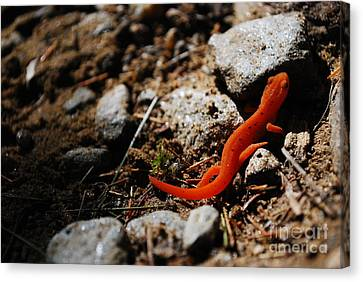 My Name Is Ned The Newt Canvas Print by Susan Hernandez