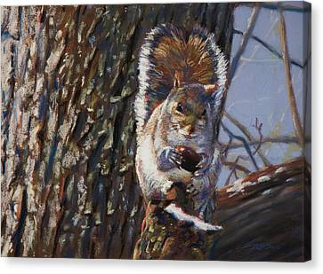Squirrel Canvas Print - My Nut by Christopher Reid