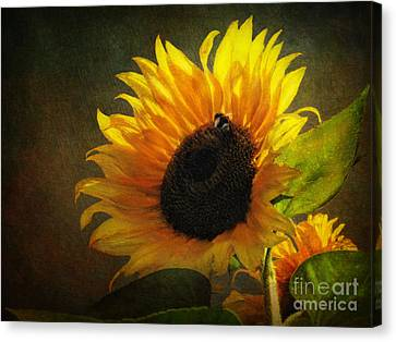Digital Sunflower Canvas Print - ...my Only Sunshine by Lianne Schneider