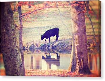 Farm Animal Canvas Print - My Own Paradise by Amy Tyler