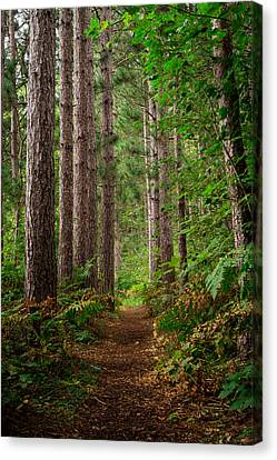 My Path Canvas Print