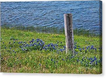 My Peace Canvas Print by Lisa Holmgreen