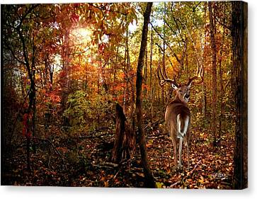 My Place Canvas Print by Bill Stephens