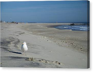 Lonely Canvas Print - My Seagull Friend by Jennifer Ancker