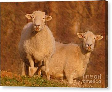 Canvas Print featuring the photograph My Sheep ...   by Lydia Holly