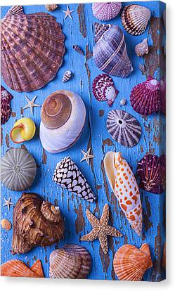 My Shell Collection Canvas Print by Garry Gay