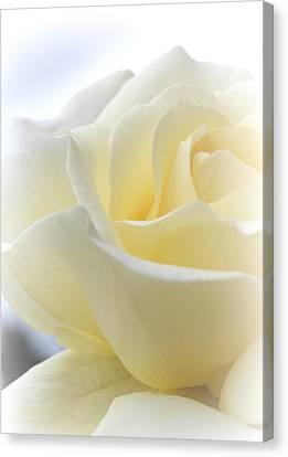 My Sweet Summer Rose Canvas Print by The Art Of Marilyn Ridoutt-Greene