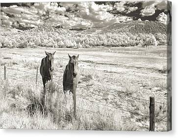 My Two Friends Canvas Print by Jon Glaser