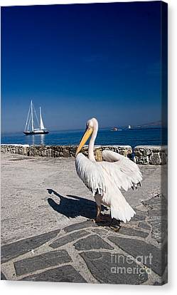 Mykonos Pelican Canvas Print by David Smith