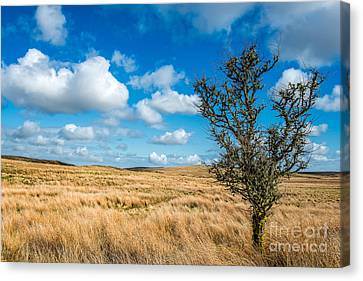 Mynydd Hiraethog Canvas Print by Adrian Evans