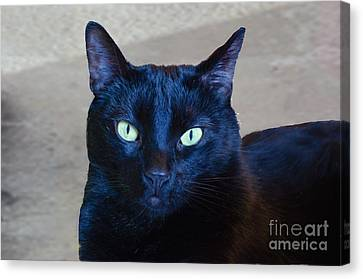 Mysterious Black Cat Canvas Print by Luther Fine Art