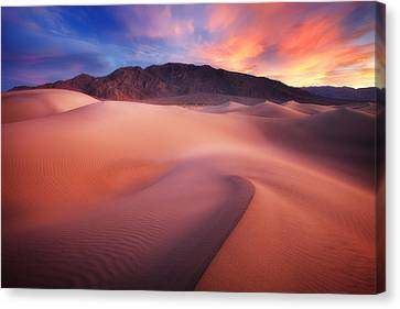 Mysterious Mesquite Canvas Print by Darren  White