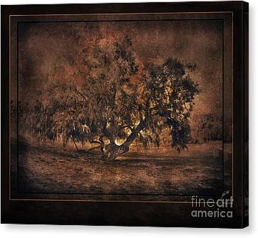 Mysterious Mesquite Canvas Print by Erika Weber