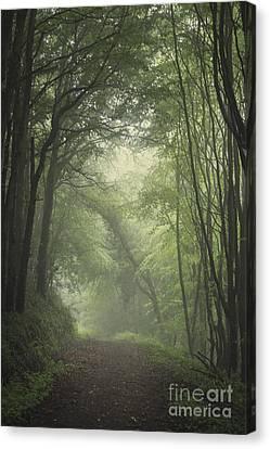 Mystery Awakens Canvas Print by Evelina Kremsdorf