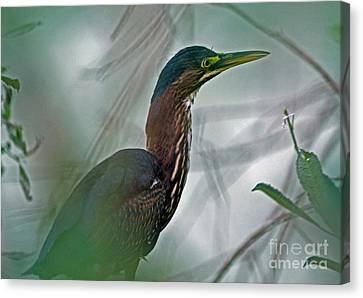 Mystery In The Marsh Canvas Print by Inspired Nature Photography Fine Art Photography